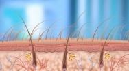 1.3. Влияние ретиноидов на волосяные фолликулы и сальные железы